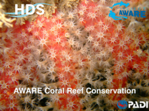 aware_reef_page