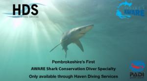 aware_shark+_page
